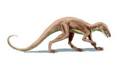 Marasuchus