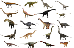 SauropodomorphaInfobox.png