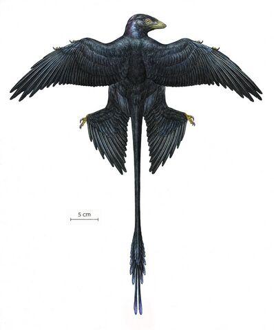 File:Microraptor-reconstruction.jpg