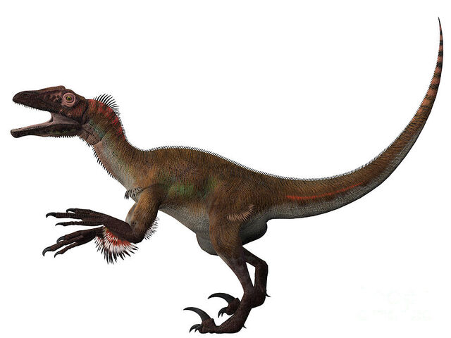 File:2-utahraptor-corey-ford.jpg