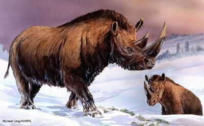 Woolly rhinoceros 1
