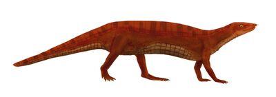 Neoaetosauroides