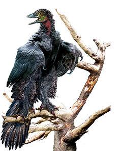 Archaeopteryx2.jpg