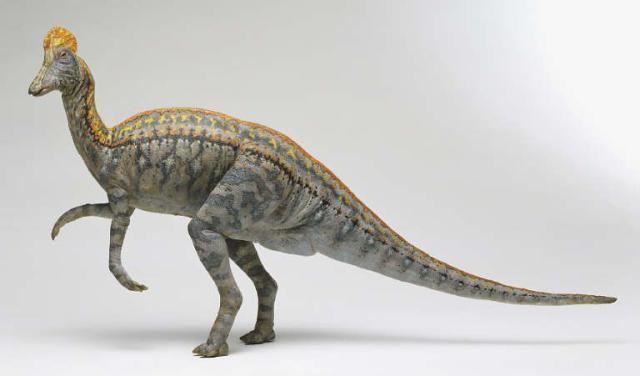 File:CorythosaurusST 2201.jpg
