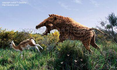 Archaeotherium Poebrotherium
