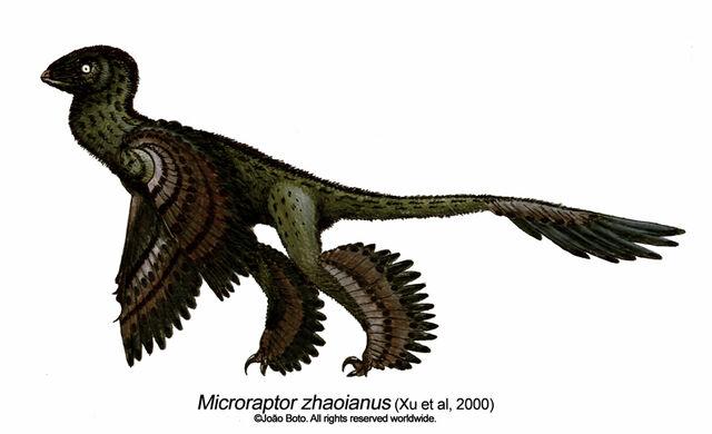 File:Microraptor zhaoianus by Sputatrix.jpg
