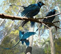 Microraptor-utex.jpg