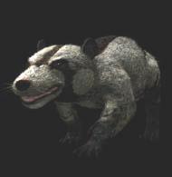 Prowling didelphodon.jpg