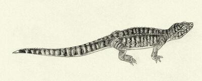 Monjurosuchus by kahless28-d34r8da
