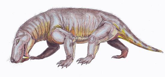 Broomicephalus