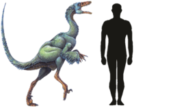 Troodon Size Comparison