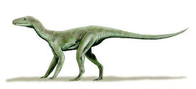 Ignotosaurus