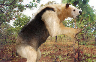 800px-South American Homalodotherium