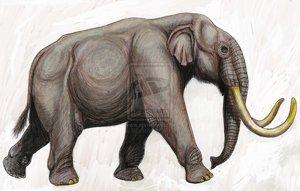 Phanagoroloxodon
