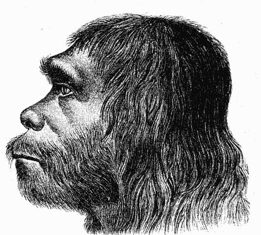File:Neanderthaler Fund.png