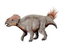 Ajkaceratops