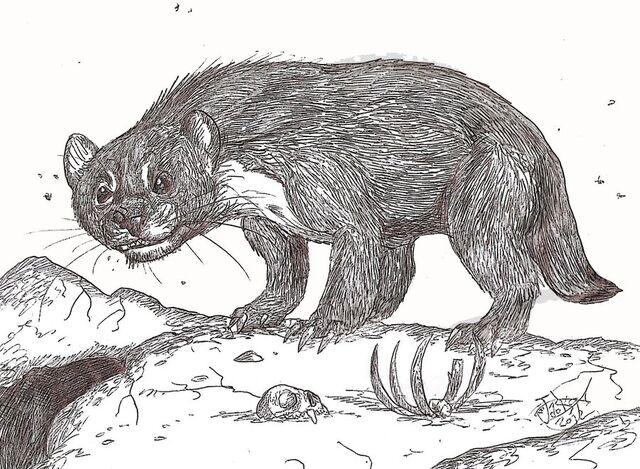 File:Megalictis by hodarinundu-d52eqrr.jpg