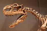 250px-Monolophosaurus skull