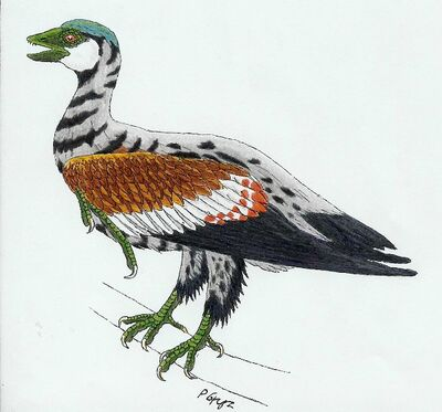 Archaeorhynchus