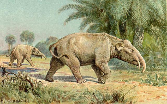 File:PalaeomastodonIllustration.jpg