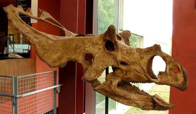 File:UtahceratopsCISa.jpg