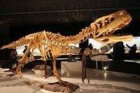 250px-Aucasaurus