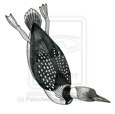 Neogaeornis wetzeli by paleoaeolos-d6jhwq7