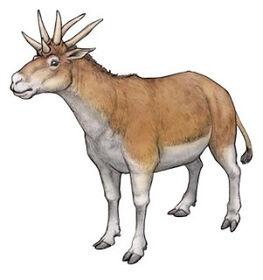 Hexameryx