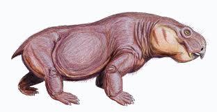 Austalobarbarus