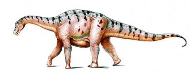 File:Bonitasaura.jpg