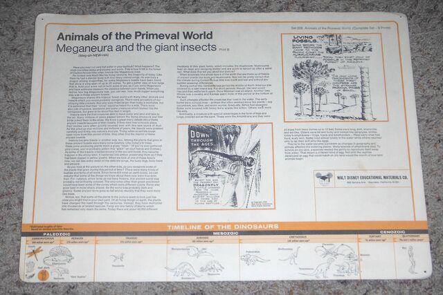 File:Primeval World Meganeura card back.jpg