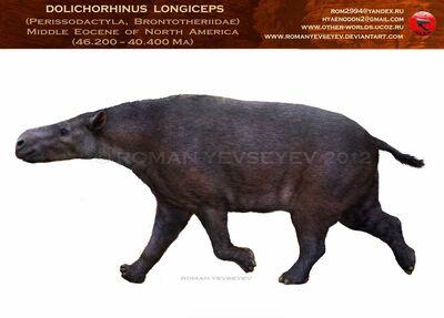 Dolichorhinus