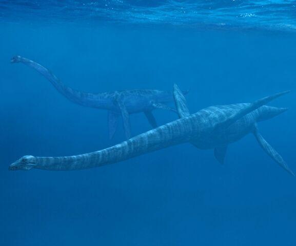 File:Serpent de Mer Elasmosaurus.jpg