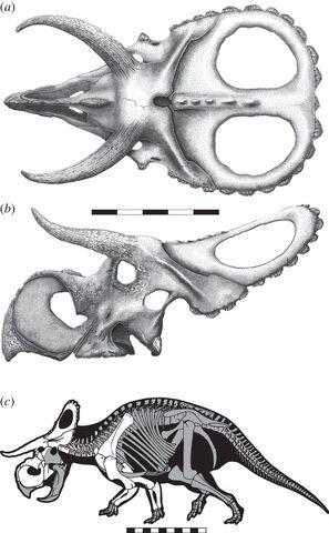 File:Nasutoceratops skull and skeleton.jpg