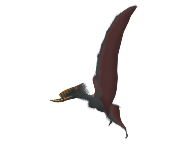 File:Dsungaripterus weii by primevalraptor-d5oawml.png