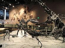 Fossil displays - Natural History Museum of Utah - DSC07215