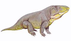 Erythrosuchus afr12DB.jpg