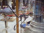 Bambiraptor1