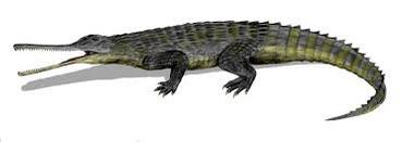 New phytosaur