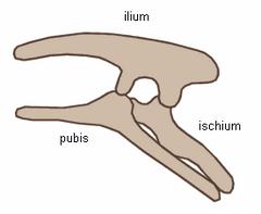 Ornithischia.png