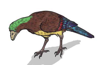 Aberratiodontus 01