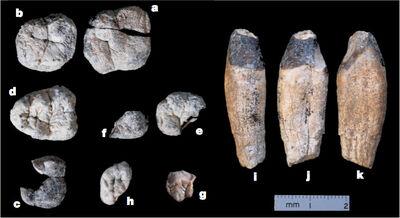 Nine-chorapithecus-teeth