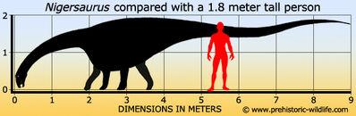 Nigersaurus-size