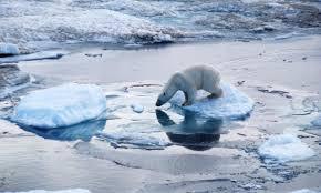 File:Polar.jpg