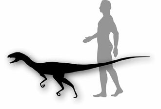 Eoraptor and Human comparison