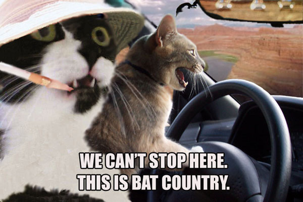 File:Fear and loathing cats.jpg