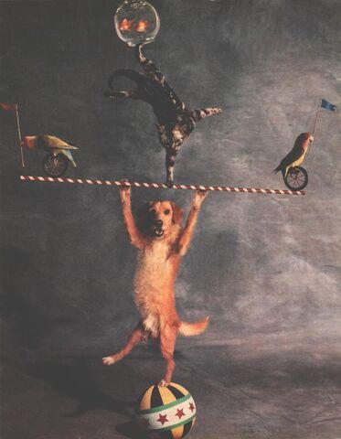 File:Chaosdog.jpg