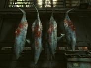 Sharks01