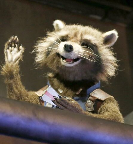 File:Rocket Raccoon.jpg