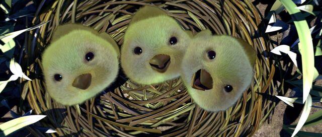 File:Baby Birds.jpeg